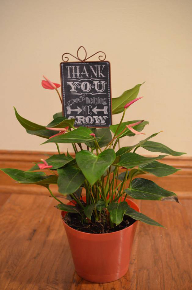 Wedding Gift Plant : Saturday 4 March 2017 by The girls at weddingsonline