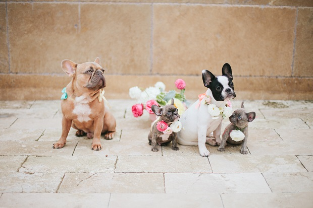 wedding flowers for pets
